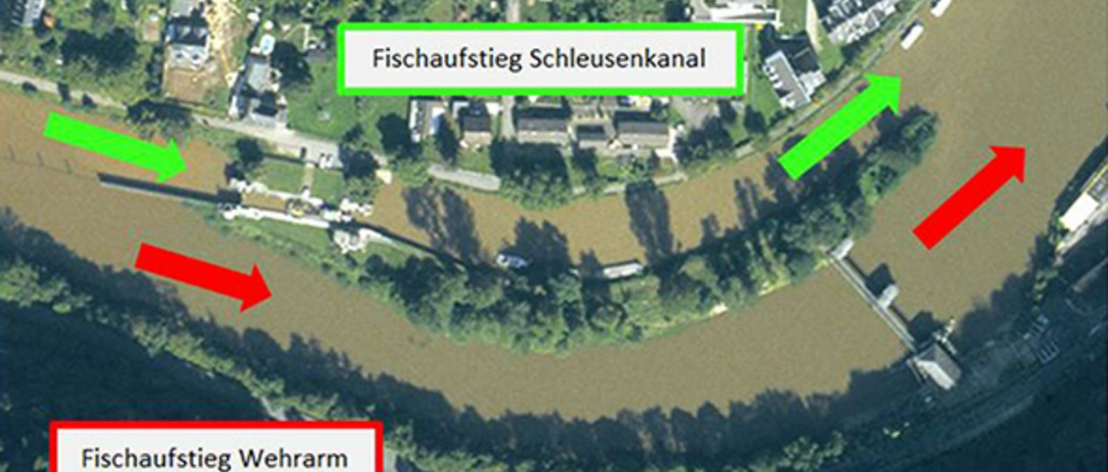 [Translate to English:] Fischschleusung